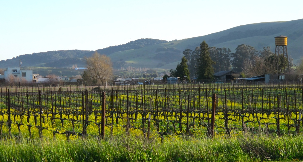 Sonoma Country Strong