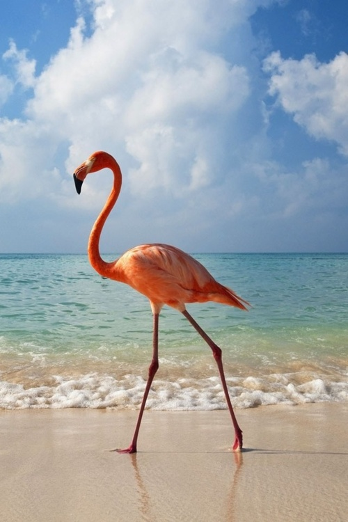Natural Inspiration ~ Flamingo Pink
